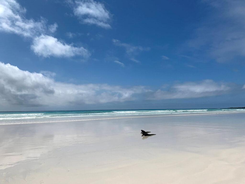 Tortuga - Iguana - Galapagos