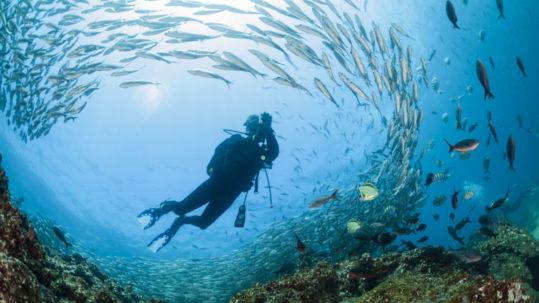duiker Galapagos
