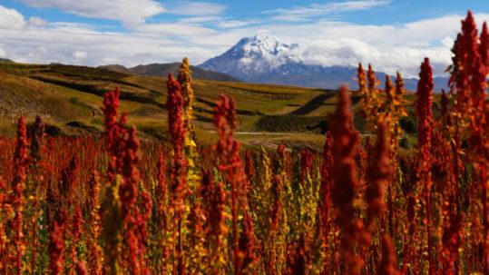 Landscape near Riobamba