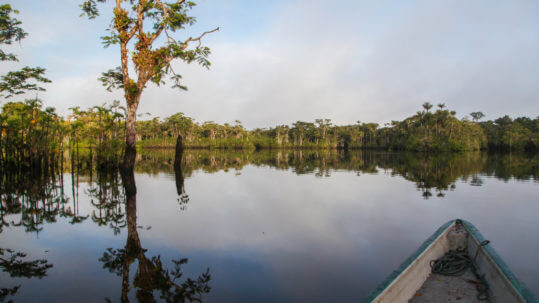 Orellana in the Amazon
