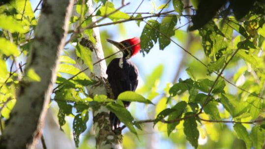 bird Amazon