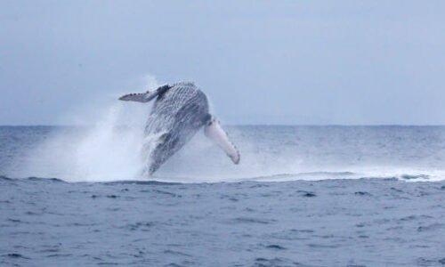 whale pacific coast