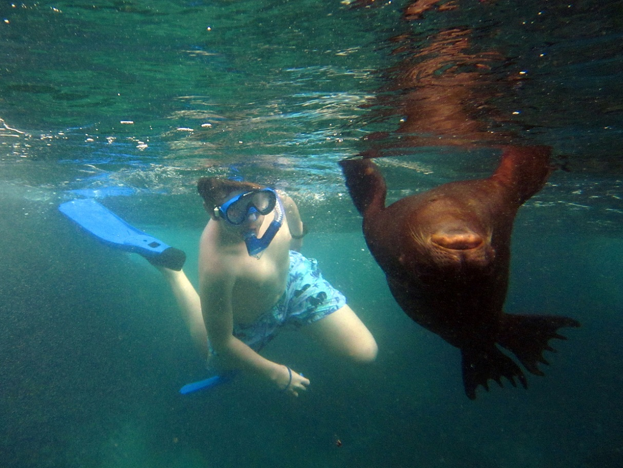 to do in Ecuador: snorkeling Galapagos