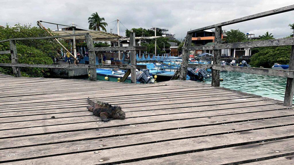 Puerto Ayora - Galapagos