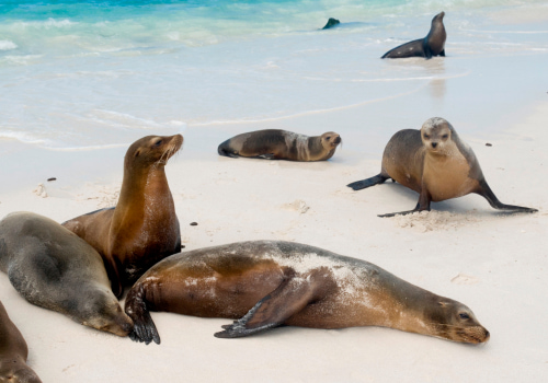 Isla de San Cristóbal Galapagos
