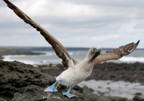 Isla Floreana Galapagos