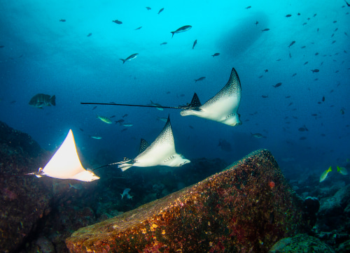 Sporty tours in the Galapagos Islands
